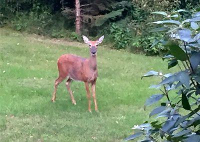 deer-pine-park